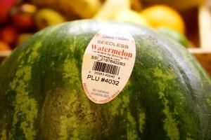 Watermelon 4032